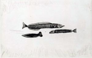 Komaifish