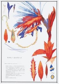 Saitosabaki